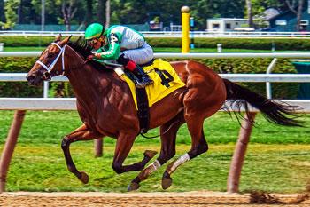 Horse Race Photo